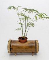 Doğal Tekli Yatay Bambu Saksı Naturel Saksılık...