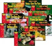 İngilizce Hikaye Kitabı Seti 21 (12 kitap)